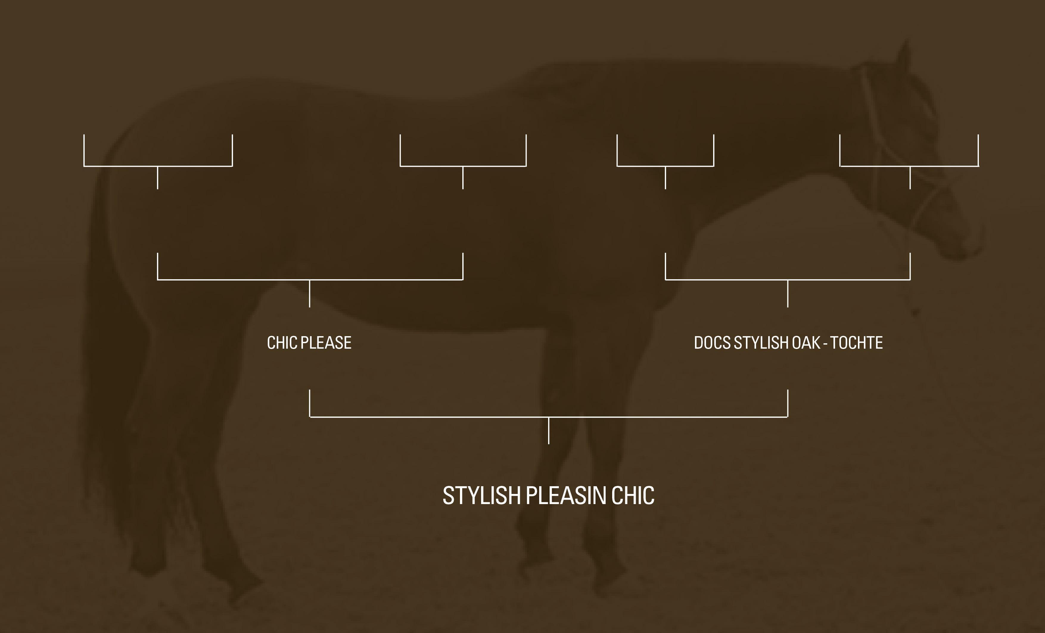 Stammbaum-Stylish-Pleasin-Chic-07-2018